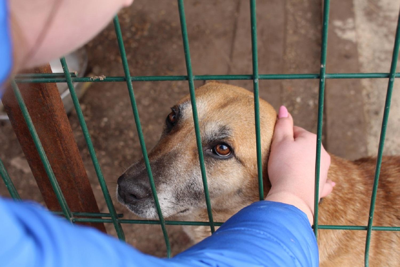 Безпритульні тварини завжди потребують допомоги, але особливо – з настанням холодів
