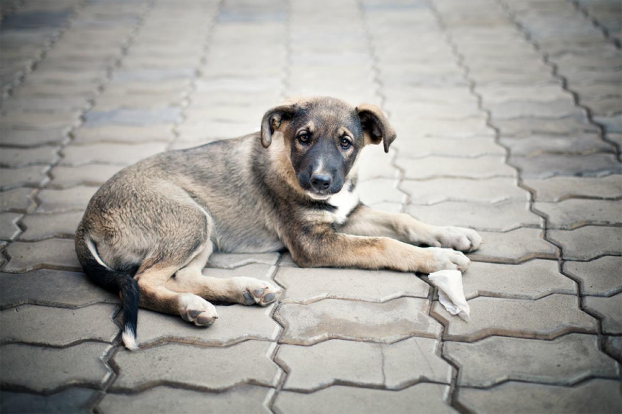 Як у Полтаві допомогти безпритульним тваринам під час морозів