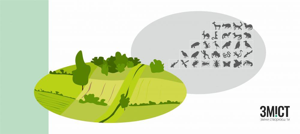 Взаємозв'язок між типами та видами рослинності та тварин.
